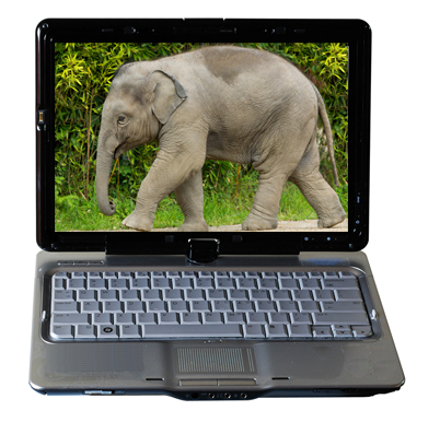 The Elephant in Your Web Site: Cost